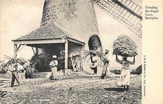BARBADOS - Windmill, grinding the sugar cane - Publ. Seifert. | eBay