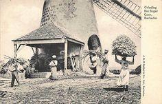 BARBADOS - Windmill, grinding the sugar cane - Publ. Seifert. | eBay