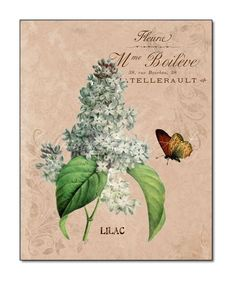 """Lilac Botanical Print, Flowers with Butterfly, 8x10 Print, """"Flower Garden IV Lilac"""", Giclee"""