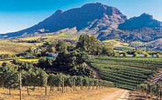 Graham Boynton tastes his way around the South African winelands, now known as much for their gourmet dining trails as their verdant vineyards