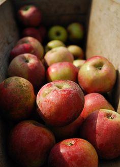 HBW Straford Cider Apples By AIA GUY..Rwood, via Flickr