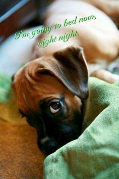good night on Pinterest | Good Night, Sweet Dreams and Good Night ...