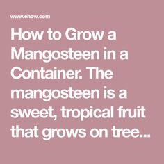 9 Best mangosteen images in 2018   Trees to plant, Exotic
