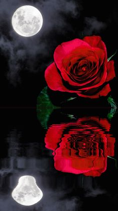 """Gif de rosas para enviar por whatsApp el dia del amor yla amistad. Descarga estas bonitas imagenes con movimiento de rosas y envía a tu novio o novia por mensaje, teniendo asi un romántico detalle de san valentin. Saluda a tus amigos en facebook y google plus, con estas lindas rosas animadas, junto a un mensaje de amistad lindo para celebrar este 14 febrero, dia del amor y la amistad. """"Gif de Rosas Para Enviar Por WhatsApp El Dia Del Amor Y La Amistad"""" """"Imagenes gif para enviar por mensaje… Rosas Gif, Image N, Romantic Images, Red Roses, Animation, Wallpaper, Awesome, Flowers, Anime"""