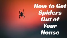 How to Get Spiders Out of Your House Without Killing Them - The Guardian. Mosquito Trap, Rifle Scope, Spiders, The Guardian, Essentials, How To Get, Amazing, House, Spider