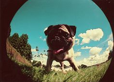 Pug Lomography?!! Can it get any better than this?