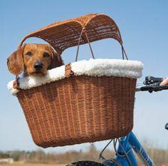 Bedlington Terrier DOG HANGING CAR SIGN with Rubber Sucker 27