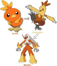 pokemon torchic evolution coloring pages - photo#31