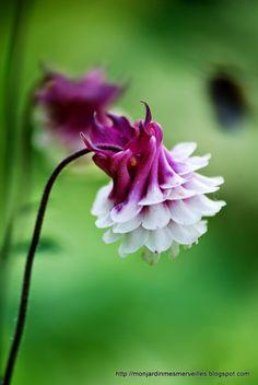 Mon Jardin Mes Merveilles: mai 2014
