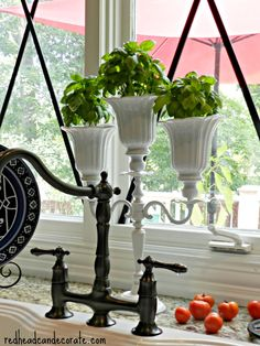 Basil in Candelabra Planter make from ceiling fan shades