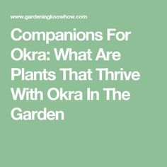 Companions For Okra: What Are Plants That Thrive With Okra In The Garden