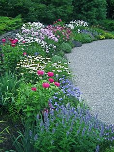 Great Perennial Border, perennials, colorful border, colorful garden, spring garden, spring perennials