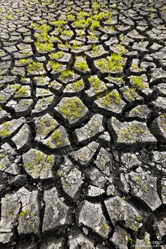 I love this!! Awesome contrast between the parched and severely cracked earth and life going on regardless!