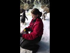More fun than getting a hug from a penguin.