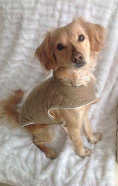 Traje perro modelo Paw de MuckaPets en Etsy