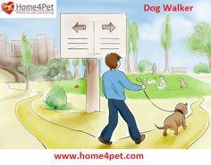 #home4pet #pet #walker
