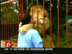 The woman in this video found the lion injured in the forest ready to die. She took the lion with her and nursed it back to health. When the lion was better, she made arrangements with a zoo to take the lion and give it a new and happy home.    This video was taken when the woman, after some time, went to visit the lion.    Watch the lion's reaction when he sees her. AMAZING!!! Animals have the biggest hearts in the world!!!