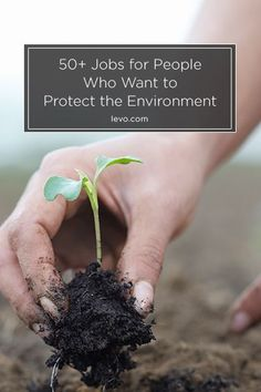 Calling all #environmentalists: these are the top jobs for you! www.levo.com