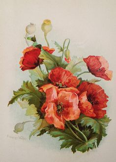 Hey, I found this really awesome Etsy listing at https://www.etsy.com/listing/183681229/vintage-poppies-chromolithograph