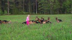 Kleines Mädchen hat Mordsspaß mit 14 Schäferhunden.  #hund #Schäferhunde #Mädchen   http://sumowave.com/kleines-maedchen-hat-mordsspass-mit-14-schaeferhunden/