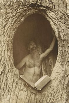 Man in the tree. Ca. 1900