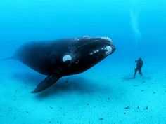 Brian Skerry: The ocean's glory -- and horror via TED