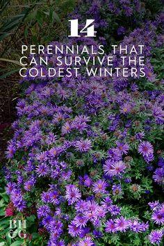 Best Perennials, Hardy Perennials, Hardy Plants, Spring Perennials, Flowers Perennials, Planting Flowers, Perennial Flowers For Shade, Perrenial Flowers, Part Shade Perennials