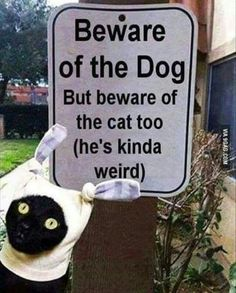 OMG, that cat's expression is hilarious!!!!!