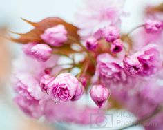 Spring pink flowers by Mshphoto on Etsy