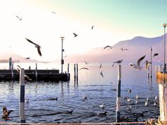 10 precious advices to visit the wonderful Lake Iseo across its beautiful landscapes, historical monuments and good wine.
