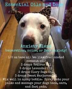 Massage with essential oils for dogs with anxiety
