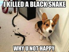 funny pictures and quotes: I killed a black snake, why u not happy?