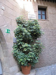 Creatively Displaying Plants How Do You Do It House Stuff Pinterest Plants House Plants And Shower Pole