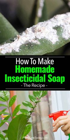 How To Make Homemade Insecticidal Soap Recipe Homemade insecticidal soap sprays use a soap solution to kill plant bugs. The Oil soap insecticide works as a Natural control for garden pest [LEARN HOW] Insecticide For Plants, Homemade Insecticide, Natural Insecticide, Natural Pesticides, Aphid Spray Homemade, Garden Bugs, Garden Insects, Garden Pests, Cleaning Tips