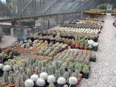 Greenhouse at B Cactus Farm in Tucson, Arizona. http://cactusplants.org/b-b-cactus-farm/pictures.htm