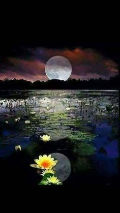 All Photo, Images, Picture, Wallpaper Moon Images, Moon Pictures, Nature Pictures, Beautiful Nature Wallpaper, Beautiful Moon, Beautiful Landscapes, Shoot The Moon, Moon Photography, Cute Wallpaper Backgrounds