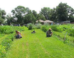 Everitt Farms - building a local food district in a Colorado community