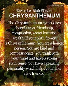 November Birth Flower : Chrysanthemum