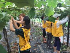 하나님의교회 세계복음선교협회 농촌일손돕기 봉사활동입니다.