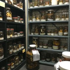 Racks and racks of specimens