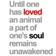 how true....I use this one for pet sympathy cards....