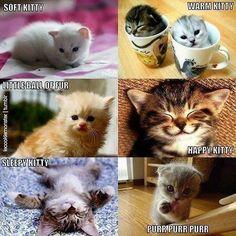 Different Types Of Kitties