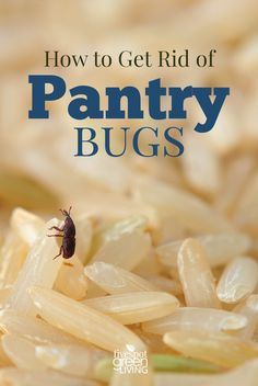 Have you ever pulled out your flour or cornmeal and found little creepy crawlies in it? If you don't secure pantry items like flours and baking goods, the bugs will find a home inside! Here's how to get rid of pantry bugs and beetles without chemicals. Healthy Bread Recipes, Sandwich Bread Recipes, Bugs In The Kitchen, Keep Bugs Away, Get Rid Of Ants, Beneficial Insects, Insect Repellent, Tick Repellant, Aromatherapy
