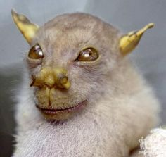 What the hell is this.(Tube-nosed fruit bat)