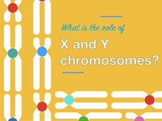 50 Karyotyping Ideas In 2021 Chromosomal Abnormalities Chromosome Cell Division