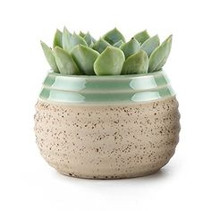 T4U 7.5CM Clay Glazed Stripe Oblate Sucuulent Plant Pot/Cactus Plant Pot Flower Pot/Container/Planter Beige: Amazon.co.uk: Garden & Outdoors