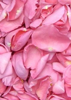Biodegradable Freeze Dried Rose Petals in Pink 8 Cups