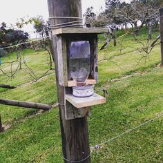 Sugar water for the nectar - eating tui. I hope it doesn't rot their teeth :) Tui Bird, Birds And The Bees, Outdoor Living, Outdoor Decor, Garden Art, Garden Ideas, Tropical Garden, Bird Feeders, Most Beautiful Pictures