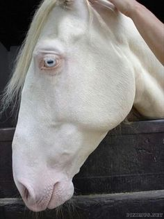 gorgeous. Reminds me of my horse.. White Lighting!