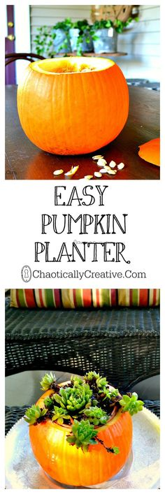 a pumpkin planter would be a great halloween or autumn/winter table centrepiece